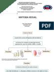 Sistema Renal embriologia y fisiologia.pptx