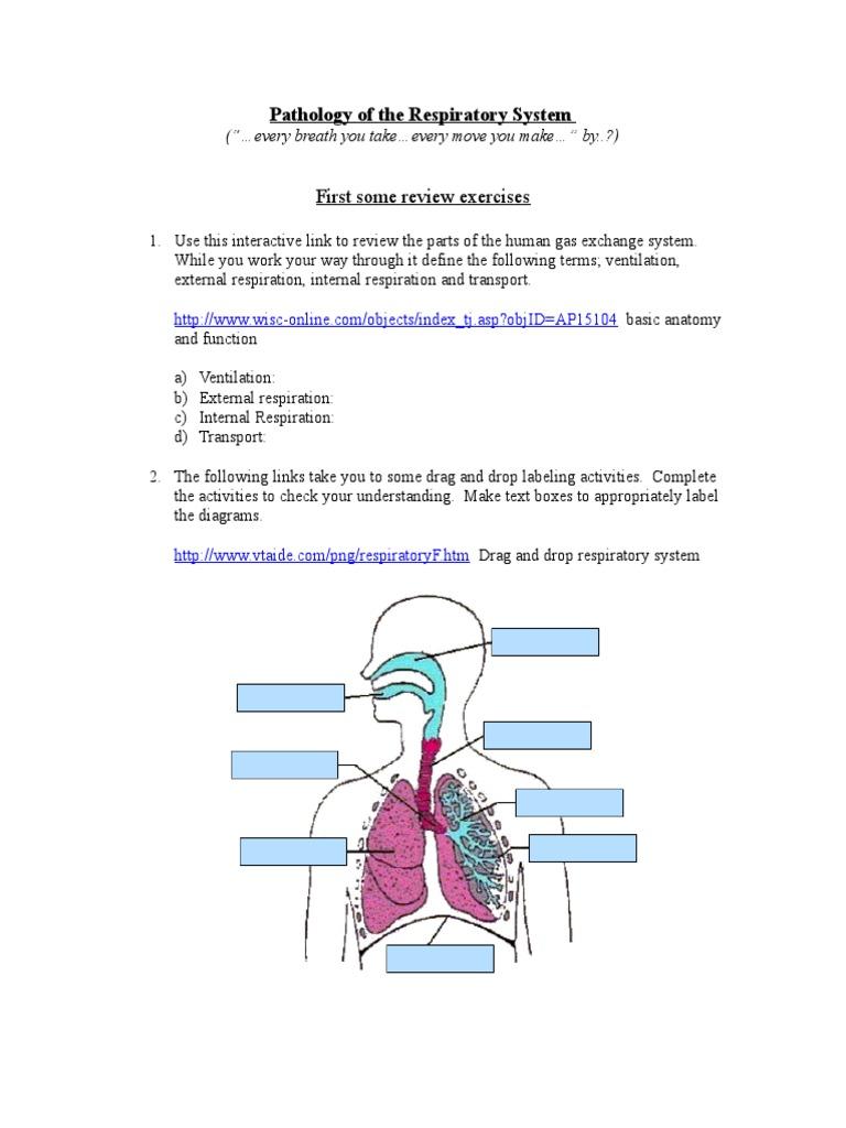 Rsp Sys Pathology Dec2011 | Respiratory System | Breathing