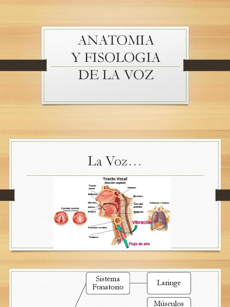 Presentación1 Ultimo