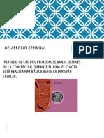 Desarrollo Germinal