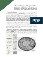 Comparaci+¦n-entre-c+®lulas-procari+¦ticas-y-eucari+¦ticas.pdf
