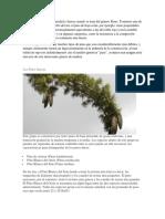 Hay Un Buen Rango de Densidad y Fuerza Cuando Se Trata Del Género Pinus