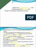 Nitrogen Cycle Pdf
