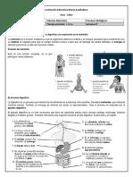 La Digestiòn y Respiracion