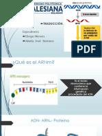 Traducción (ARNm Ribosoma)