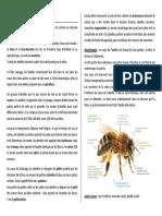animaux- abeille.pdf