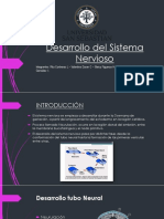 Desarrollo Del Sistema Nervioso Definitivo