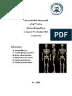 Carpeta de Anatomía - Huesos