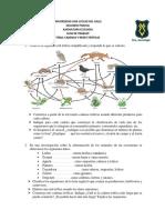GUIA_DE_TRABAJO_CADENAS_Y_REDES_TROFICAS_IIP_2018.docx