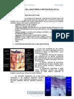 1. Embrio, Anato e Histo de La Piel