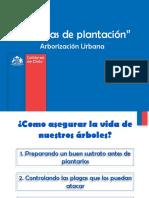 Tecnicas de Plantación