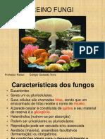 Fungos Aula