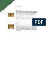 basic_tools.pdf