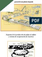 04Procesos Químicos de Pulpeo