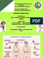 Endocrino Corregida