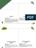 Herbario Otro Modelo