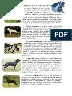 5 Mejores Perros