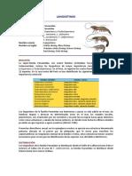 langostinos.pdf