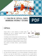 Capsula, Pared, Membrana Interna y Externa