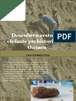 Carlos Erik Malpica Flores - Descubren Restos de Elefante Prehistórico en Oaxaca