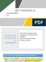 Tema 4. Estructura y Función de La Membrana