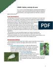 1.-Salida-de-Aves (1)