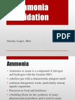Ammonia Oxidation