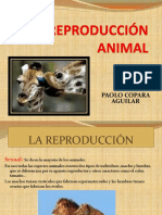 Reproduccion Animal
