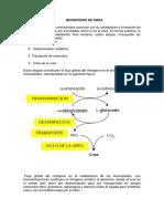 BIOSINTESIS DE LA UREA.docx