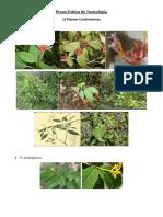 Atlas Principais Plantas Tóxicas para Animais - UFLA