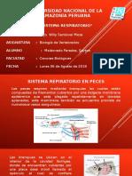 VERTEBRADOS SISTEMA RESPIRATORIO.pptx