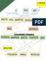 CONSUMIDORES PRIMARIOS.pdf