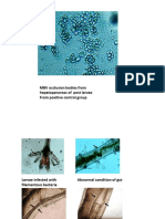 larvae Images.pptx