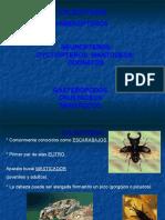 TPN (8) Masticadores II 2014.ppt