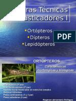 TPN (8) Masticadores II 2014