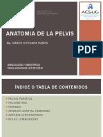 03 Anatomia de pelvis.pdf