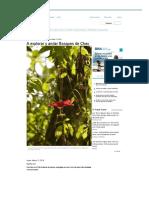 A explorar y andar Bosques de Chec.pdf