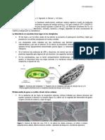 5 FOTOSÍNTESIS.pdf