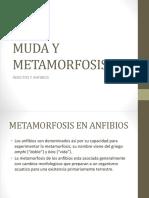 Muda y Metamorfosis
