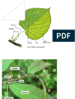 Lecture 10 - Leaves.pdf
