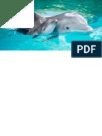 Reproduccion de Los Delfines