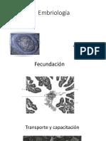 Embriología clases.pdf