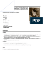 Sistema Nervioso Completo_0