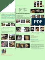 Mushroom Leaflet
