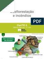 Desflorestação e Incêndios