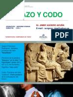 Brazo Codo 2018. ANATOMIA HUMANA USMP