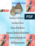 Growing Psilocybe azurescens.pdf