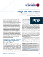 Phage and yeast display