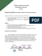 Carbohidratos,lipidos y proteinas.doc