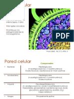 2d.Pared CelularBRV.pdf